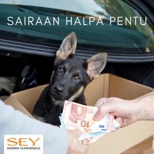 Koiranpentu takakontissa pahvilaatikossa ja etualalla eurot vaihtavat omistajaa